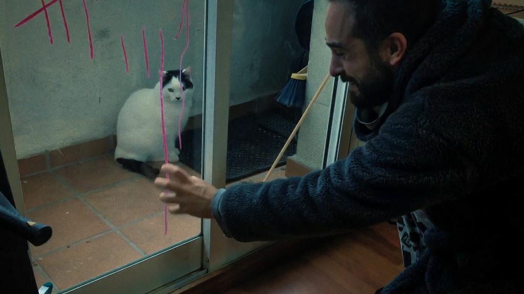 TRAPPED CAT (DIR. JAMIE FIDALGO) (SPAIN) (2:00)